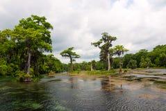 Fiume di Wakulla dell'inondazione della primavera, Florida, U.S.A. Immagine Stock