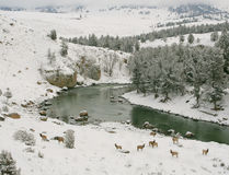 Fiume di Yellowstone superiore Fotografia Stock Libera da Diritti