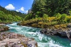 Fiume e foresta della montagna nel parco nazionale del nord Washington U.S.A. delle cascate Fotografia Stock
