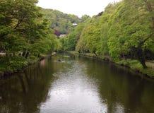 Fiume e sponde del fiume del bagno di Matlock compreso le imbarcazioni a remi Fotografia Stock