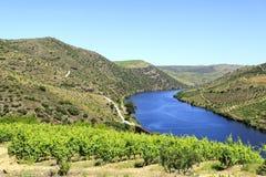 """Fiume e vigne del †della valle del Duero """" Fotografia Stock"""