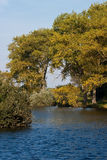 Fiume ed alberi fotografia stock libera da diritti
