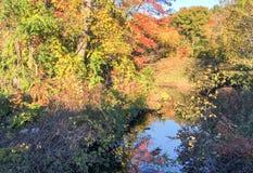 Fiume ed alberi nella stagione di fogliame Immagine Stock Libera da Diritti