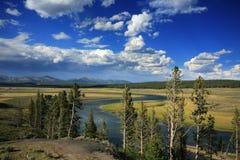 Fiume ed albero di Yellowstone Fotografie Stock Libere da Diritti