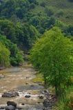 Fiume fangoso in foresta verde Immagine Stock Libera da Diritti