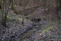 Fiume in foresta Immagine Stock