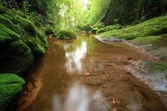 Fiume in foresta profonda Immagine Stock