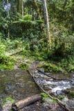 Fiume in giungla del Panama Immagine Stock