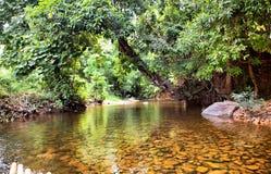 Fiume in giungla, Tailandia Fotografie Stock Libere da Diritti