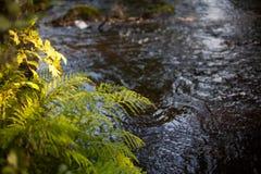Fiume incontaminato in primavera Fotografia Stock Libera da Diritti