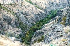 Fiume Kasakh del canyon con vegetazione ed alberi lungo la riva Immagini Stock Libere da Diritti