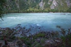 Fiume Katun, Siberia, Altai della montagna Fotografie Stock