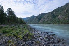 Fiume Katun, Siberia, Altai della montagna Immagini Stock