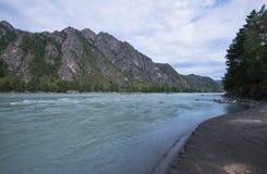 Fiume Katun, Siberia, Altai della montagna Fotografia Stock