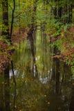 Fiume luminoso della foresta alla caduta Fotografie Stock Libere da Diritti