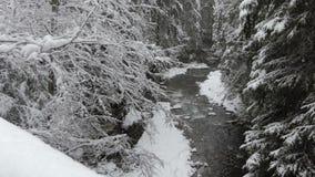 Fiume magico del tempo di inverno nella foresta della montagna durante le precipitazioni nevose archivi video