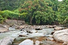 Fiume naturalmente non sviluppato in Bentong, Pahang, Malesia Immagini Stock