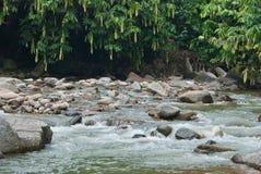 Fiume naturalmente non sviluppato in Bentong, Pahang, Malesia Fotografie Stock Libere da Diritti