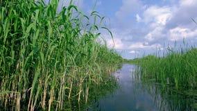 Fiume nel delta di Danubio video d archivio