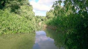 Fiume nel delta di Danubio stock footage
