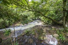 Fiume nel dschungle del Panama Fotografie Stock