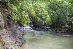 Fiume nel dschungle del Panama Fotografia Stock Libera da Diritti