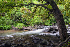 Fiume nel parco di stato della valle di Iao, Maui, Hawai Immagine Stock