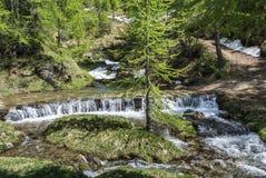 Fiume nella foresta dell'alpe di Devero Immagine Stock Libera da Diritti