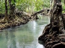 Fiume nella foresta della mangrovia Fotografia Stock