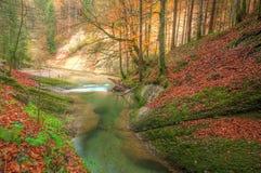 Fiume nella foresta di autunno Immagine Stock