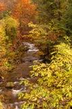 Fiume nella foresta di autunno Immagini Stock