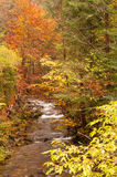 Fiume nella foresta di autunno Fotografia Stock Libera da Diritti