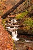 Fiume nella foresta di autunno Fotografie Stock Libere da Diritti