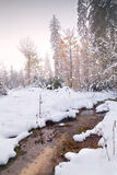Fiume nella foresta di inverno Fotografia Stock Libera da Diritti