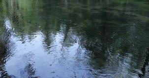 Fiume nella foresta e nella riflessione degli alberi nell'acqua stock footage