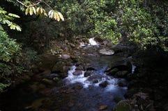 Fiume nella foresta pluviale immagini stock libere da diritti