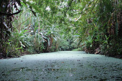 Fiume nella foresta pluviale di Costa Rica fotografie stock libere da diritti