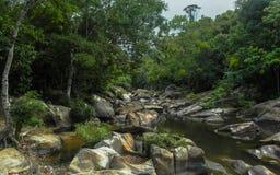 Fiume nella foresta pluviale fotografia stock libera da diritti