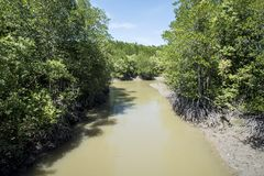 Fiume nella mangrovia all'isola della scimmia del ` s del Gio della latta fotografia stock