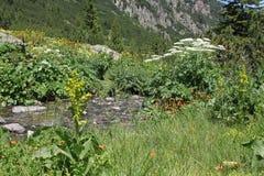 Fiume nelle montagne Fotografia Stock Libera da Diritti