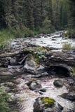 Fiume nelle montagne di Altai Fotografie Stock Libere da Diritti