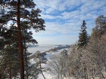 Fiume Nemunas e piante nell'inverno, Lituania Immagine Stock Libera da Diritti