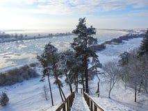 Fiume Nemunas e piante nell'inverno, Lituania Fotografia Stock Libera da Diritti