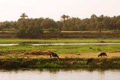 Fiume Nilo Fotografia Stock Libera da Diritti
