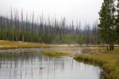 Fiume piccolo in Yellowstone fotografie stock