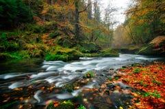 Fiume piovoso di autunno ad Edmund Gorge del parco nazionale della Boemia della Svizzera, repubblica Ceca Immagini Stock Libere da Diritti