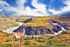 Fiume precipitante a cascata Paine delle cascate fotografia stock libera da diritti