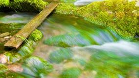Fiume in profondità nella foresta della montagna. fotografia stock