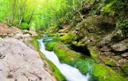 Fiume in profondità nella foresta della montagna Immagini Stock
