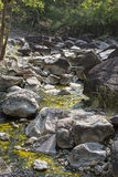 Fiume in profondità nella foresta della montagna Immagini Stock Libere da Diritti